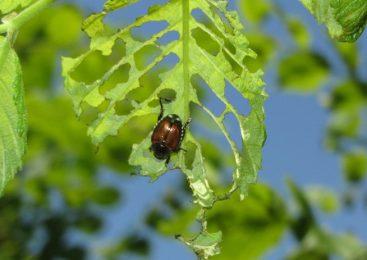 Магазин «Спецтехнология» — 3 самых распространенных вида инсектицидов и лучшие средства от вредителей